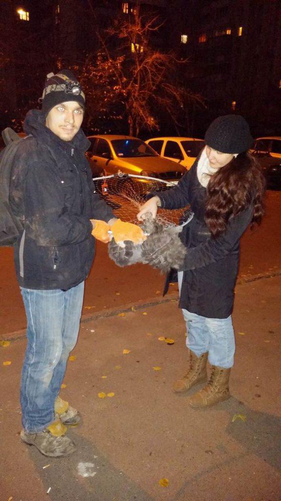 Отлов диких котят