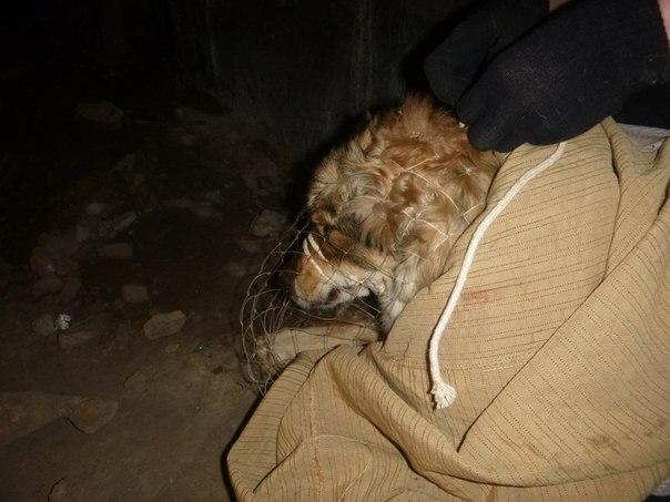 Спасение собаки, попавшей под поезд