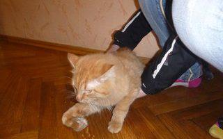 Спасение кота, упавшего с балкона