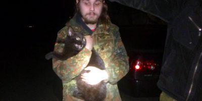 Спасение кошки из теплотрассы