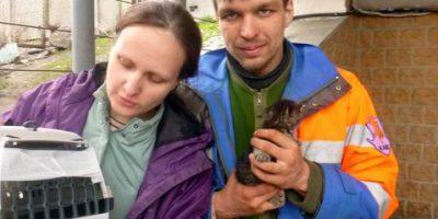 Спасение кошки с котенком