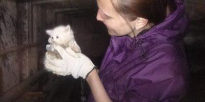 Спасение котенка из коллектора