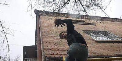 Спасение котенка из-под водосточной трубы