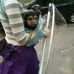 Спасение щенков из-под гаража