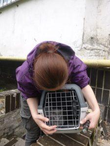 Отлов котят в бомбоубежище