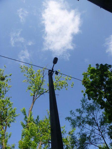 Спасение голубя