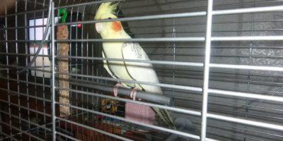 Спасённый попугай